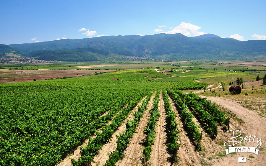 Wine news from Bulgaria